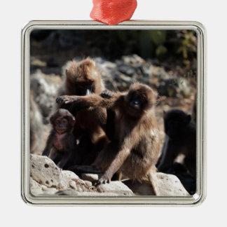 Ornement Carré Argenté Groupe de babouins de gelada (gelada de