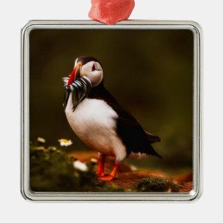 Ornement Carré Argenté Île animale d'Océan atlantique de faune d'oiseau