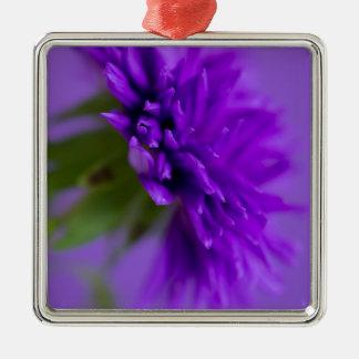 Ornement Carré Argenté Image en gros plan de l'aster de fleur sur le