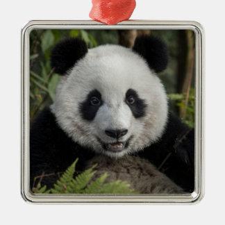 Ornement Carré Argenté Jeune panda heureux, Chine