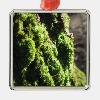 Ornement Carré Argenté La mousse verte dans le détail de nature de la