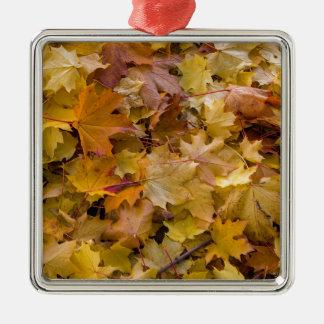 Ornement Carré Argenté L'automne d'arbre d'érable laisse l'arrière - plan