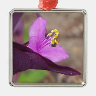 Ornement Carré Argenté le plante pourpre a appelé le spiderwort et une
