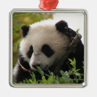 Ornement Carré Argenté Le Su Lin, petit animal d'ours panda géant au zoo