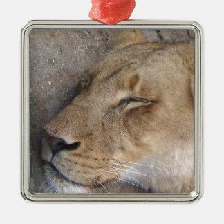 Ornement Carré Argenté Lionne de sommeil