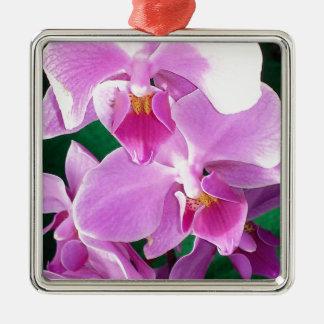 Ornement Carré Argenté L'orchidée fleurit plan rapproché dans le rose