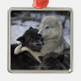 Ornement Carré Argenté Loups dans la neige | Montana, Etats-Unis