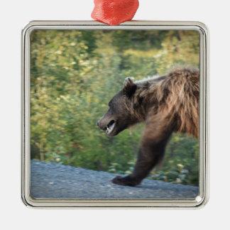 Ornement Carré Argenté L'ours gris le Yukon, Canada attaque, des