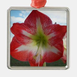 Ornement Carré Argenté MegaStar2 rouge et blanc de l'amaryllis 106a