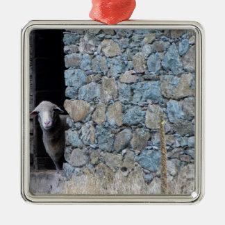 Ornement Carré Argenté Mouton Corse