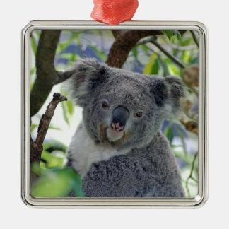 Ornement Carré Argenté Ours de koala dans un arbre