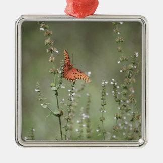 Ornement Carré Argenté Papillon de fritillaire de Golfe