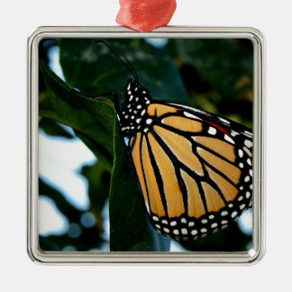 Ornement Carré Argenté Papillon de monarque dans les lilas