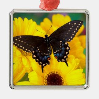 Ornement Carré Argenté Papillon noir de machaon