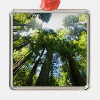 Ornement Carré Argenté Parc national de séquoia