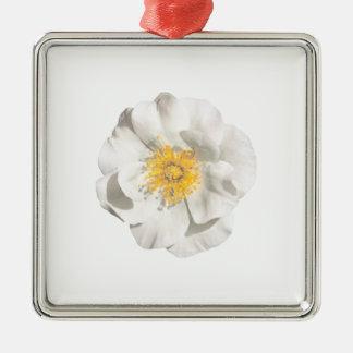 Ornement Carré Argenté Photo de fleur blanche