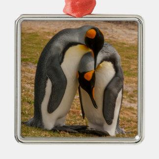 Ornement Carré Argenté Pingouins de roi caressant, les Malouines