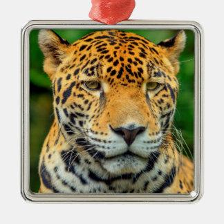 Ornement Carré Argenté Plan rapproché d'un visage de jaguar, Belize