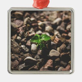 Ornement Carré Argenté Plante feuillu vert commençant à se développer sur