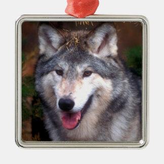 Ornement Carré Argenté Portrait d'un loup gris