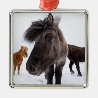Ornement Carré Argenté Portrait islandais de cheval, Islande