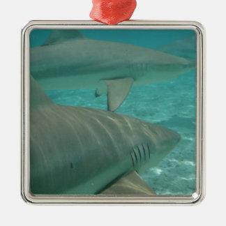 Ornement Carré Argenté shark