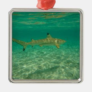 Ornement Carré Argenté Shark in bora bora