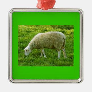 Ornement Carré Argenté Sheep - Mouton