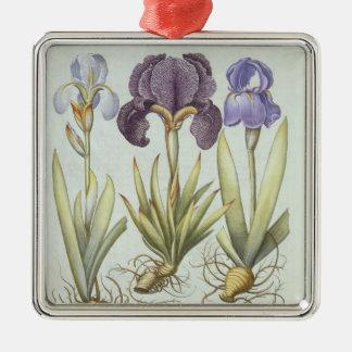 Ornement Carré Argenté Trois variétés d'iris imberbes de Rhizomatous