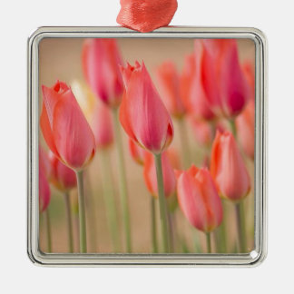 Ornement Carré Argenté Tulipes rêveuses