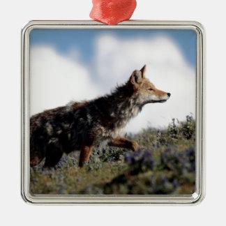 Ornement Carré Argenté Un coyote marche en parc national de Yellowstone,