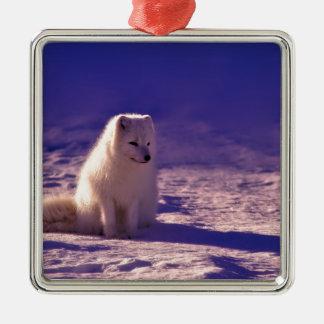Ornement Carré Argenté Un Fox arctique en Norvège
