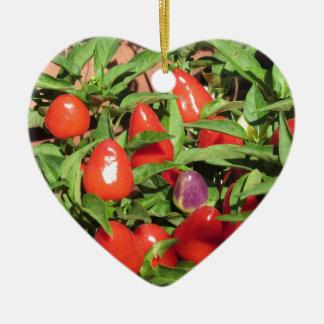 Ornement Cœur En Céramique Poivrons de piment rouge accrochant sur le plante