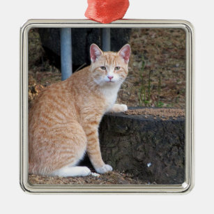 Ornement de chat de tabby orange