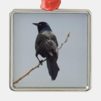 Ornement de Noël d'oiseau de Grackle