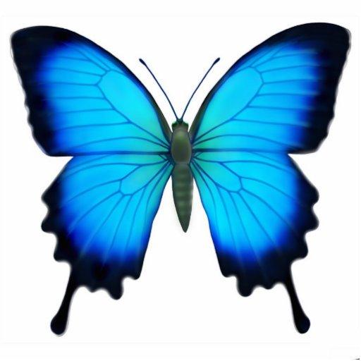 Ornement de papillon de papilio ulysse zazzle - Papillon dessin couleur ...