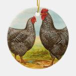 Ornement de poulets de Plymouth Rock barré par cru
