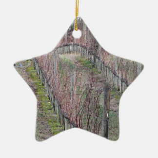 Ornement Étoile En Céramique Champ nu de vignoble en hiver. La Toscane, Italie