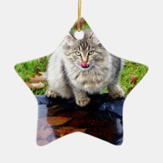 Ornement Étoile En Céramique Chat tigré sauvage avec un regard piercing