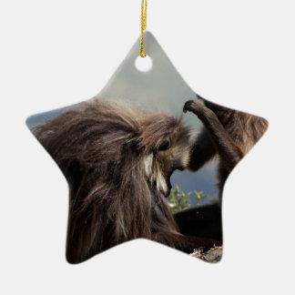 Ornement Étoile En Céramique Deux babouins de gelada (gelada de Theropithecus)