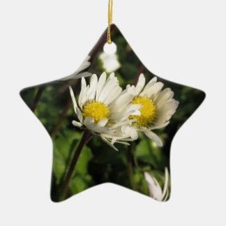 Ornement Étoile En Céramique Fleurs de marguerite blanche sur l'arrière - plan