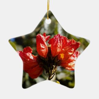 Ornement Étoile En Céramique Fleurs d'un tuliptree africain