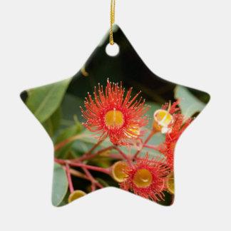 Ornement Étoile En Céramique Gomme fleurissante rouge (ficifolia de Corymbia)