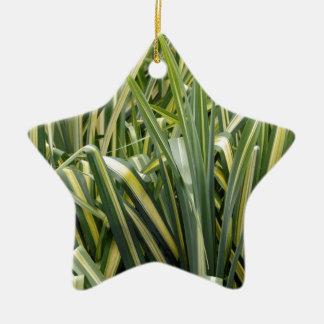 Ornement Étoile En Céramique Herbe variée de carex