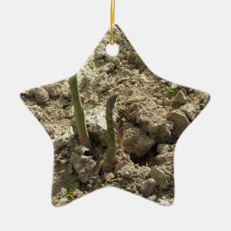 Ornement Étoile En Céramique Jeune asperge verte poussant de la terre