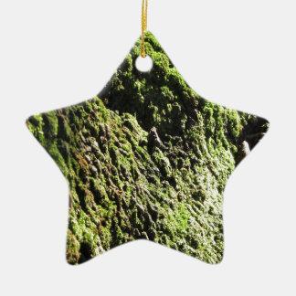 Ornement Étoile En Céramique La mousse verte dans le détail de nature de la