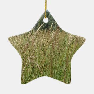 Ornement Étoile En Céramique Paysage d'été de champ sauvage. La Toscane, Italie