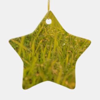 Ornement Étoile En Céramique Photo de détail d'herbe