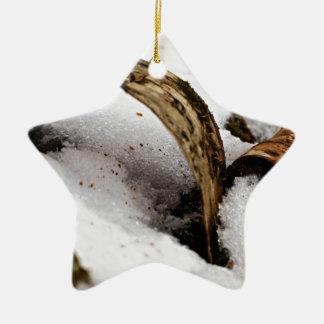 Ornement Étoile En Céramique Plancher de forêt