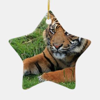 Ornement Étoile En Céramique Portrait de CUB de tigre